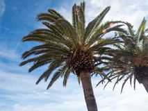 Palm trees along the coast in Nerja at beautiful sunny day. Image of tropical vacation and sunny happiness. Spain. Palm trees along the coast in Nerja at Royalty Free Stock Image
