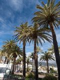 Palm trees along the coast in Nerja at beautiful sunny day. Image of tropical vacation and sunny happiness. Spain. Palm trees along the coast in Nerja at Stock Image