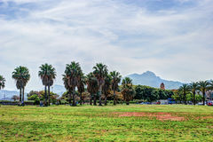 Palm trees along the coast in Palermo at beautiful sunny day. Royalty Free Stock Images