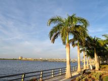 Palm trees along the Manatee River in Bradenton, Florida with a bridge in the background royalty free stock images