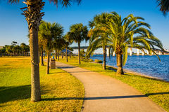 Palm trees along a path in Daytona Beach, Florida. Royalty Free Stock Images