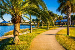 Palm trees along a path in Daytona Beach, Florida. Stock Images