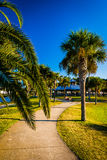 Palm trees along a path in Daytona Beach, Florida. Royalty Free Stock Image
