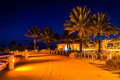 Palm trees along a path at night in Clearwater Beach, Florida. Stock Photo