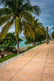 Palm trees along a path at South Point Park, Miami, Beach. Stock Image