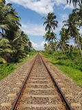 Palm trees along the railway royalty free stock images
