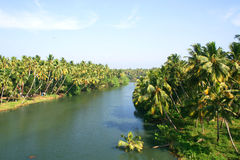Palm trees along river. Palm trees along the river in Kerala, India Stock Photo