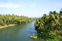 Palm trees along river Stock Photo