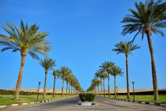 Palm trees along the road Royalty Free Stock Image
