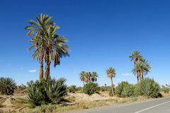 Palm trees along the road Stock Image