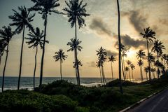 Palm trees along a road in Ghana. Plan trees line a coastal road in Ghana Africa in this evening picture royalty free stock photography