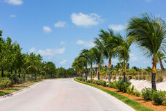Palm trees along a road Stock Photos