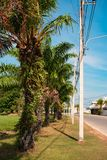 Palm trees along the road. Street lighting road posts royalty free stock photo