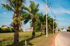 Palm trees along the road. Street lighting road posts royalty free stock photos