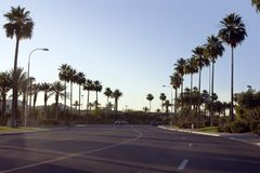 Palm Trees Along the Road of a Strip Mall Stock Images