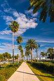 Palm trees along a sidewalk in Clearwater Beach, Florida. Stock Images