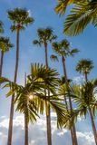 Palm trees along Tampa Riverwalk in Tampa Florida stock photo