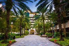 Palm trees along a walkway in downtown Saint Petersburg, Florida Royalty Free Stock Photo
