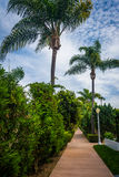 Palm trees along walkway, on Lido Isle  Stock Photos