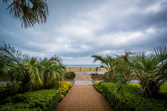 Palm trees along a walkway, in Virginia Beach, Virginia. Royalty Free Stock Photos