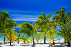 Palm trees on an amazing beach front Stock Image