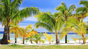 Palm trees on an amazing beach front stock footage