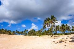 Palm trees on Anakena beach, easter island Royalty Free Stock Photos