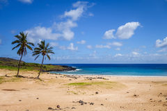 Palm trees on Anakena beach, easter island Royalty Free Stock Image