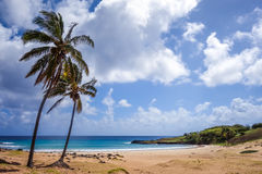 Palm trees on Anakena beach, easter island Royalty Free Stock Photography