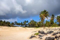 Palm trees on Anakena beach, easter island Stock Photography