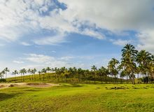 Landscape of Easter Island, Chile. Palm Trees by the Anakena Beach, Easter Island, Chile royalty free stock images