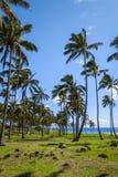 Palm trees on Anakena beach, easter island. Chile stock photos
