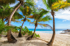 Palm trees on Anse Intendance beach at Mahe Island, Seychelles Stock Photography