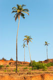 Palm trees on Arabian sea coastline Royalty Free Stock Images
