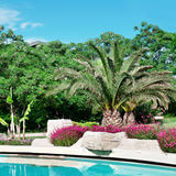 Palm trees around the outdoor pool stock image