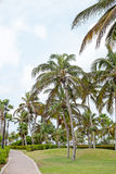 Palm trees on Aruba island in the Caribbean Royalty Free Stock Photos