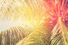 Palm Trees, as Background with solar effect Stock Photos