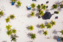 Palm trees as a background from top view. Beach and sand background from top view. Summer seascape from air. Bali island, Indonesi. A. Travel - image royalty free stock images