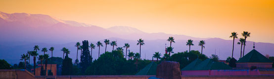 Palm trees and atlas mountains. Palm trees im marrakesh at sunset with the atlas mountains in the background Stock Photos