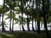 Palm trees, australia royalty free stock photo