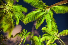 Palm trees on the background of a beautiful night sky with stars Royalty Free Stock Photography