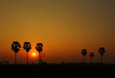 Palm trees and beautiful sunset Royalty Free Stock Photos