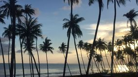 Palm trees on the background of a beautiful sunset. In southern Vietnam stock video footage