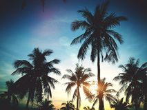 Palm trees on the background of a beautiful sunset Stock Photo