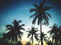Palm trees on the background of a beautiful sunset Stock Photography