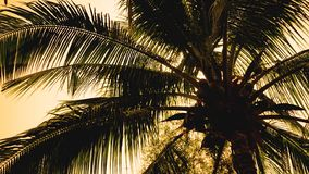Palm trees on the background of a beautiful sunset. Tropical palm leaves, floral pattern background, real photo royalty free stock photo
