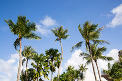 Palm trees on the background of blue sky. In Guam Stock Photos