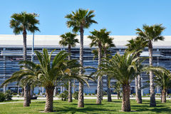 Palm trees in background industrial building Stock Images