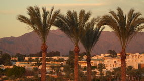 Palm trees on a background of mountains. Lit by the morning sun stock video