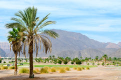 Palm trees on a background of mountains Royalty Free Stock Photo